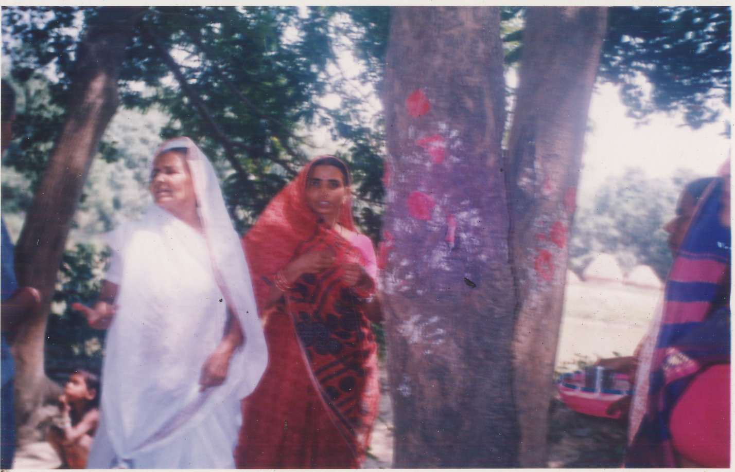Marriage with mango tree